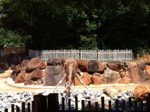 Zoo Atlanta-Animal