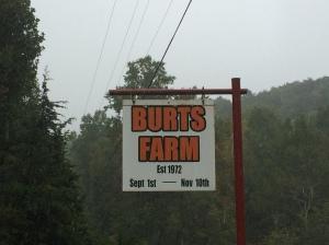 Burts 4
